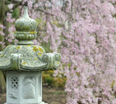 In the front you could see a stone sculpture, in the background the cherry blossom