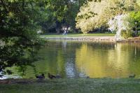 Der See im Volkspark ist Treffplatz für einige Enten. Im Hintergrund sieht man einen Fahrradfahrer, der die Enten betrachtet.