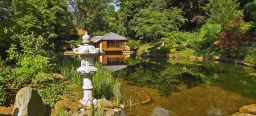 In the front you could see koi carp pond and in the background an original japanese teahouse. Both at the Japanese Garden