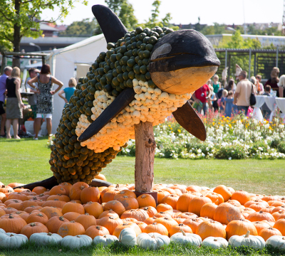 Orca sculpture made out of variegated pumpkins and timber